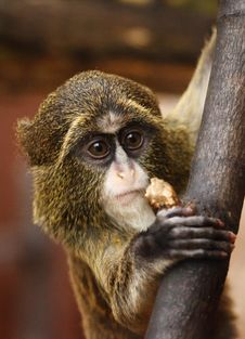 Free Mammal, Macaque, Fauna, Primate Royalty Free Stock Photo - 95892385