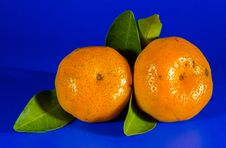 Free Citrus, Tangerine, Fruit, Clementine Royalty Free Stock Photo - 95893815