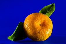 Free Fruit, Clementine, Citrus, Tangerine Stock Photography - 95893862