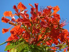 Free Plant, Flora, Flower, Sky Stock Photos - 95897653