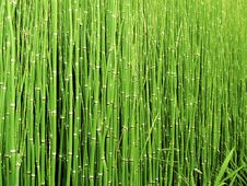 Free Green, Grass, Vegetation, Grass Family Stock Image - 95898601