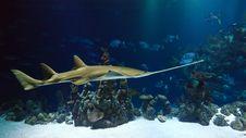 Free Marine Biology, Underwater, Water, Fauna Stock Image - 95899071