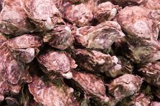 Free Oysters Royalty Free Stock Image - 9590006