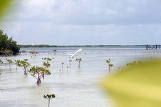 Paradise Pleasure Gulf Stock Photos