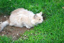 Free Tawny Cat Royalty Free Stock Photos - 9590448