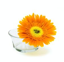 Free Flower In Glass Vase Royalty Free Stock Photos - 9590898