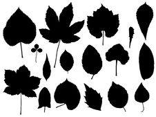 Free Leaf Vector Royalty Free Stock Images - 9590969
