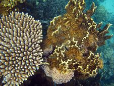 Free Beautiful Coral Gardens Stock Photos - 9591733