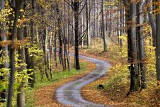 Free Autumn Forest Royalty Free Stock Photography - 9594117