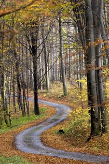 Free Autumn Forest Stock Photography - 9594122