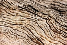 Free Tree Bark (Background) Royalty Free Stock Photo - 9594925
