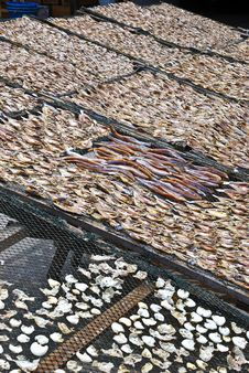 Free Dried Salted Fish Series 1 Royalty Free Stock Images - 9594939