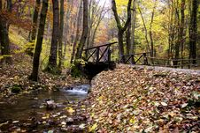 Free Autumn Forest Royalty Free Stock Photo - 9595415