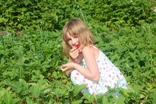 Free Child In The Strawberry Field Stock Photos - 9597603