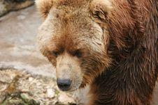 Free Bear Stock Photography - 9598122