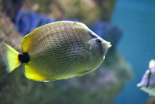 Free Exotic Fish In Tank Stock Photos - 9598793