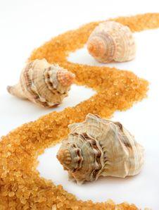 Free Three Seashells Royalty Free Stock Image - 9599386