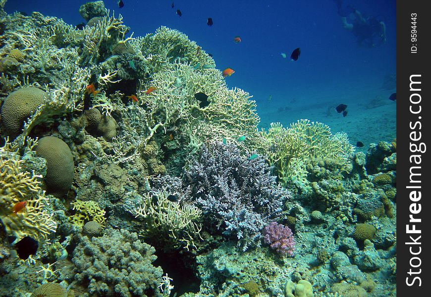 Reef and diver