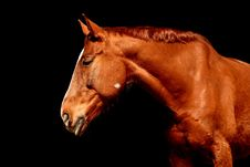 Free Horse, Halter, Bridle, Mane Stock Photo - 95903850
