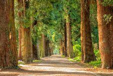 Free Tree, Nature, Path, Vegetation Royalty Free Stock Photos - 95904518