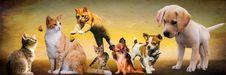 Free Dog, Dog Breed, Carnivoran, Dog Like Mammal Royalty Free Stock Photos - 95905038