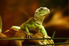 Free Reptile, Fauna, Lizard, Scaled Reptile Stock Photos - 95905953