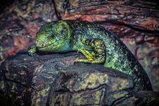 Free Reptile, Green, Scaled Reptile, Fauna Royalty Free Stock Images - 95906419