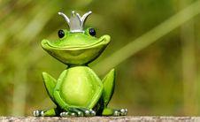 Free Ranidae, Frog, Amphibian, Tree Frog Royalty Free Stock Photography - 95906507