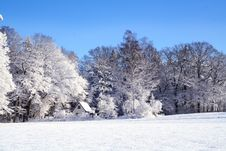 Free Snow, Winter, Frost, Tree Stock Images - 95906534