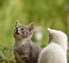Free Cat, Fauna, Small To Medium Sized Cats, Cat Like Mammal Stock Photo - 95906860