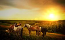 Free Horses In Country Field At Sunset Stock Photos - 95931683