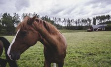 Free Horse On Landscape Against Sky Stock Photography - 95931692