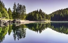Free Pine Trees Reflecting In Waterfront Royalty Free Stock Image - 95931726