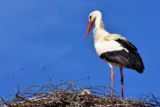 Free Bird, White Stork, Stork, Ciconiiformes Stock Image - 95959251