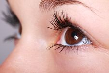 Free Eyebrow, Eyelash, Skin, Eye Royalty Free Stock Images - 95960839