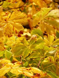 Free Leaf, Autumn, Vegetation, Deciduous Stock Photography - 95961202