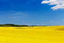 Free Yellow Field Royalty Free Stock Image - 95997126