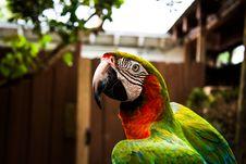Free Macaw Closeup Stock Photography - 95997212