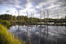 Free Dead Trees In Swamp Stock Photos - 95997293