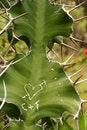 Free Botanical Garden VI Stock Image - 960721
