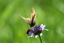 Free Butterfly Bee Royalty Free Stock Images - 961379
