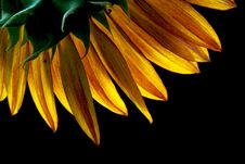 Free Golden Petals II Royalty Free Stock Photo - 961665