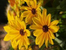 Free Daisy Royalty Free Stock Photo - 961845