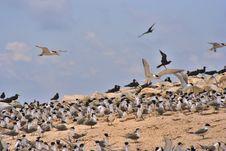 Free Bird Island Stock Photo - 962210