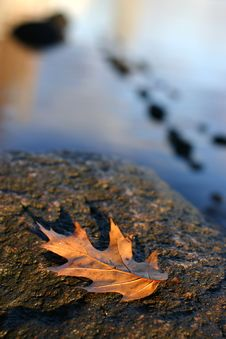 Free Fallen Autumn Leaf Stock Photography - 963232