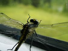 Dragon Fly Stock Photos