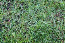 Free Green Grass Stock Photography - 964902