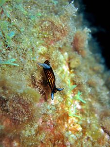 Free Nudibranch Stock Images - 965044