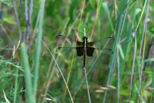 Free Dragonfly Stock Image - 965691