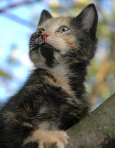 Free Curious Skewbald Kitten Royalty Free Stock Photos - 966218